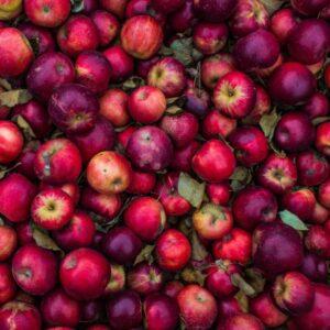 Allergitest Äpple